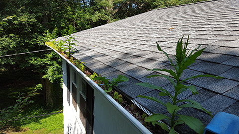 20150728 110238 front gutters growing trees and weeds small